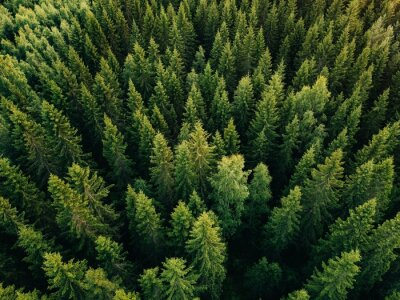Fotomural Aerial top view of summer green trees in forest in rural Finland.