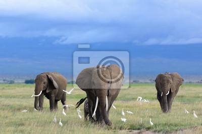 Fotomural African elephants / Kenya
