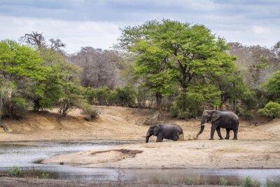 Fotomural Africano, Bush, elefante, Kruger, nacional, parque