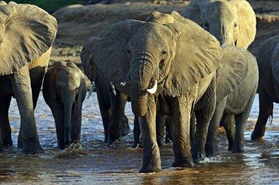 Fotomural Africano, elefantes, savana