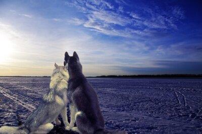 Fotomural Amantes - dois cães atender o pôr do sol