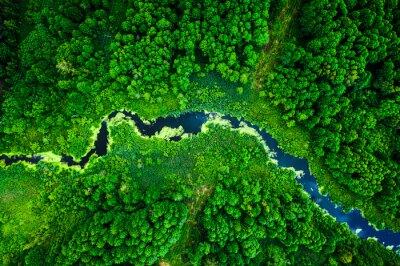 Fotomural Amazing blooming algae on green river, aerial view