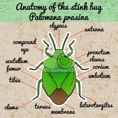 torzunák és paraziták hogyan lehet gyogyitani a parazitakat a testben