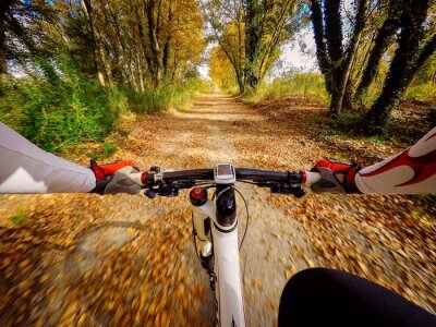 Fotomural Andando em bicicletta em autunno em campagna. Pov originalmpoin de vista