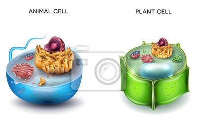 Animal Cell And Plant Estrutura Celular Seção Transversal