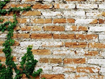 Fotomural Antigas, tijolo, parede, creeper