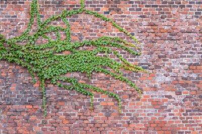 Fotomural Antigas, vermelho, tijolo, parede, overgrown, hera