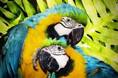 Fotomural ara papagaio