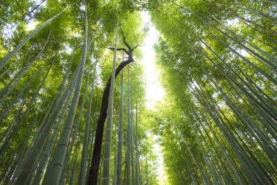 Fotomural Arashiyama, bambu, floresta, kyoto, japão