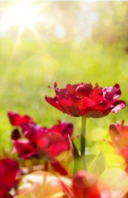 Fotomural Arte floral primavera fundo