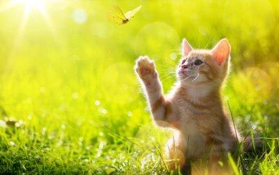 Fotomural arte jovem gato / gatinho caçar uma borboleta com Retroiluminado