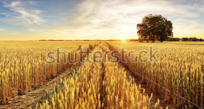 Fotomural Árvore e campo de trigo