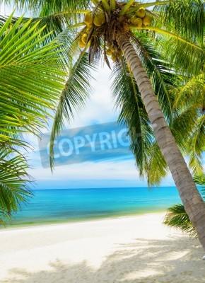 Fotomural Árvore verde em uma praia de areia branca