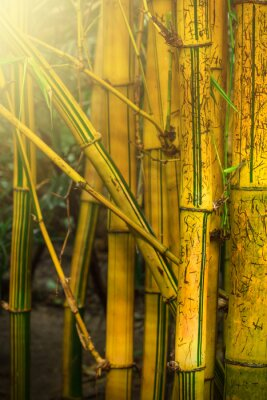 Fotomural Árvores de bambu