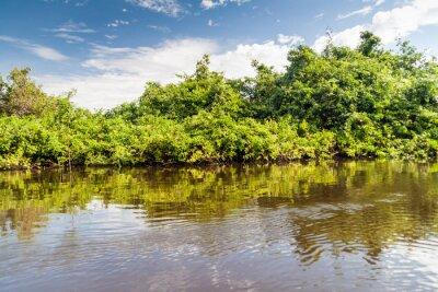 Fotomural Árvores, forro, rio, yacuma, bolívia