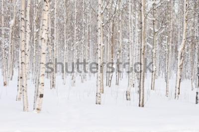 Fotomural Árvores no parque ou na floresta na neve do inverno