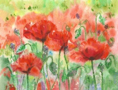 Fotomural As papoilas vermelhas florescem o fundo, aguarela.