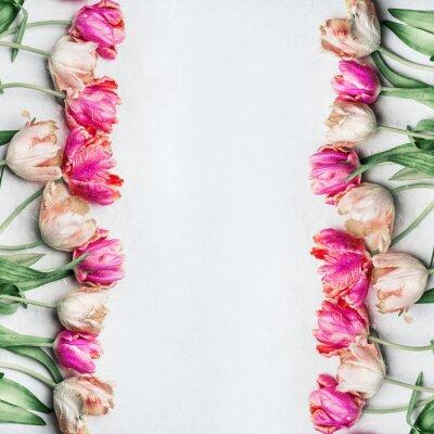 Fotomural As tulipas consideravelmente pastel da cor com água deixam cair, frame floral, vista superior. Primavera flores conceito