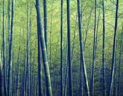 Fotomural Bamboo Forest Trees Natureza Conceitos