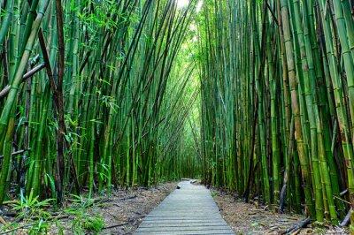 Fotomural Bamboo forrest