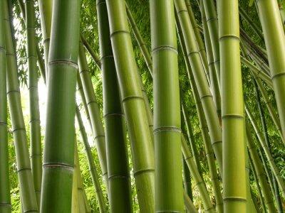 Fotomural Bamboo Jungle