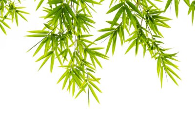 Fotomural bamboo leaves isolated on white background