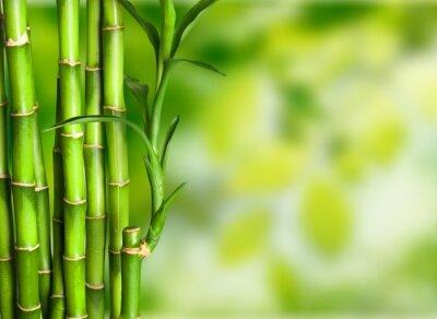 Fotomural Bambu.