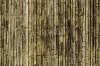 Fotomural Bambu cerca de fundo