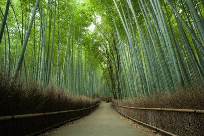Fotomural Bambu, floresta, caminho, Kyoto, Japão
