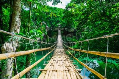 Fotomural Bambu, pedestre, suspensão, ponte, rio, tropicais, floresta, bohol, filipinas