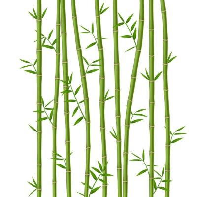 Fotomural Bambu verde com folhas isoladas no fundo branco