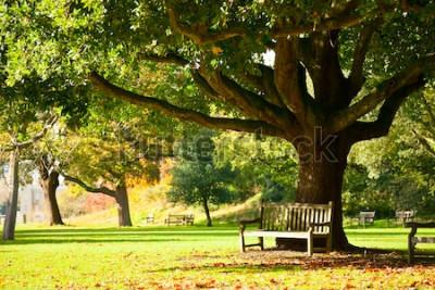 Fotomural Banco sob a árvore no Royal Botanic Gardens em Londres