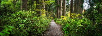 Fotomural Beautiful forest path as panorama background