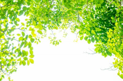 Fotomural Beautiful Green leaves on white background