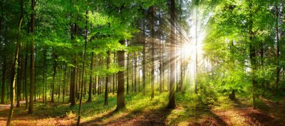 Fotomural Beautiful rays of sunlight in a green forest