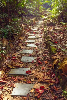 Fotomural Beautiful view of stairway to jungle, ,Thailand