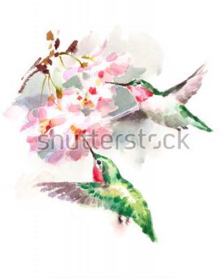 Fotomural Beija-flores de flor laranja voando ao redor das flores de cerejeira