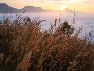Fotomural Bela paisagem monte de névoa Phu Thok