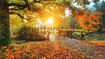 Fotomural Belas paisagens de outono no parque. Fotografia ao ar livre na luz do nascer do sol