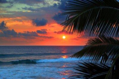 Fotomural belo pôr do sol do mar e folhas de palmeira