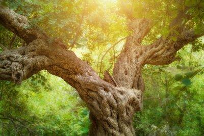 Fotomural Big árvore na floresta