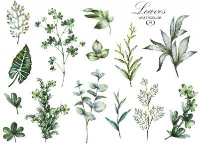Fotomural Big Set aquarela elementos - ervas, folha. Coleção de jardim e erva selvagem, folhas, ramos, ilustração isolado no fundo branco, eucalipto, exótico, folha tropical. verde