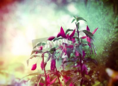 Fotomural Bonito, fúcsia, flores, verão, jardim, fundo, fim, cima, toned
