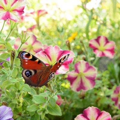 Fotomural borboleta 186