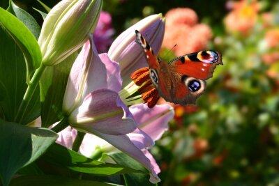 Fotomural borboleta 188