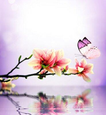 Fotomural Borboleta e flor de magnólia