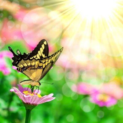 Fotomural Borboleta em uma flor