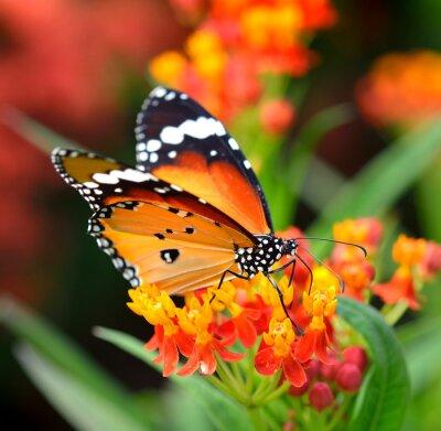 Fotomural Borboleta na flor laranja no jardim