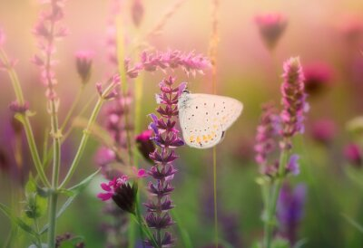 Fotomural Borboleta na flor selvagem