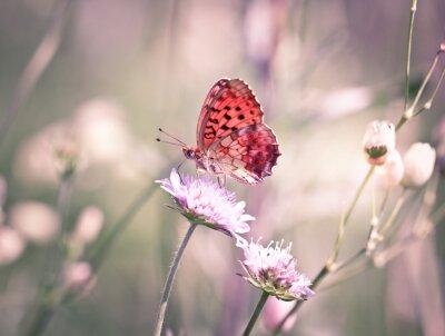 Fotomural Borboleta no wildflower